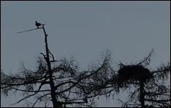 04 02 10_0785_edited-2-osprey