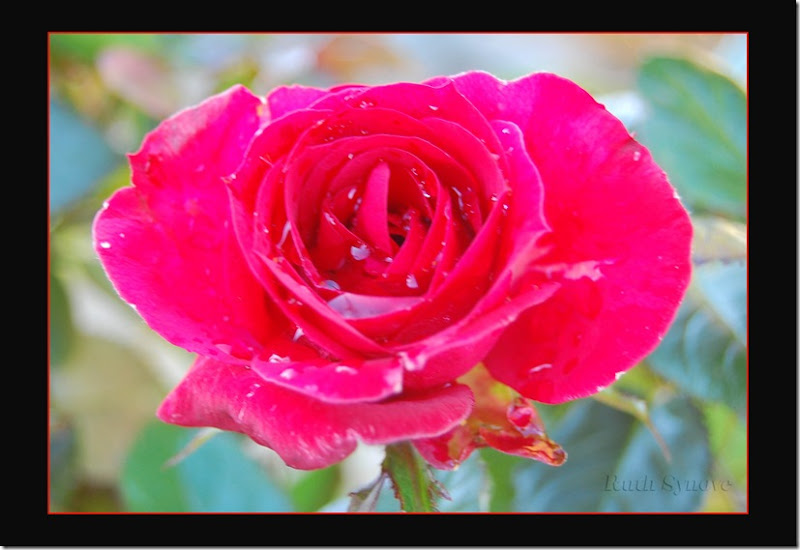 Rosen min
