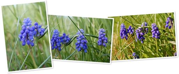 Vis Blå blomster