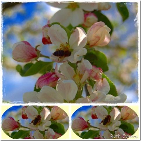 Montasje med epleblomster og veps