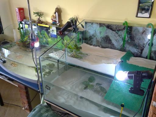 Aiuto con le alghe nell 39 acquario yahoo answers for Comprare un acquario