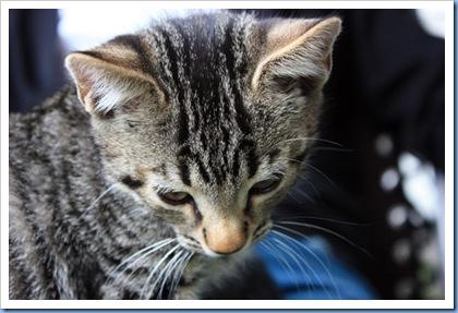 katter4