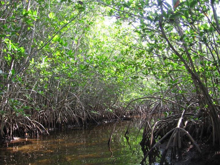 Exploration de la mangrove