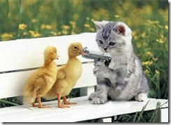 rampyari-cat_ducks