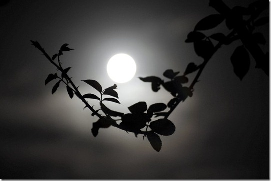 A Lua sempre encantará as pessoas...