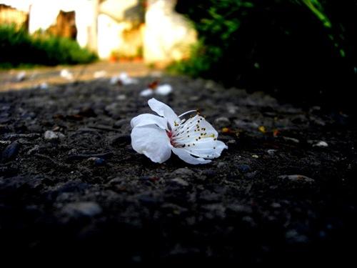 falling____by_dawgama