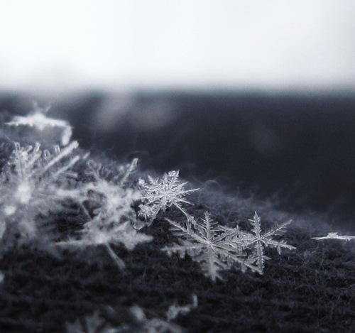 Snowflakes_by_schimmio52