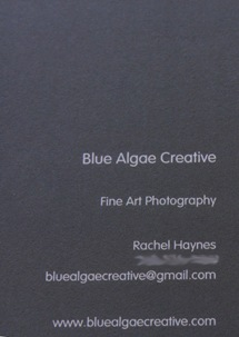 moo business cards back