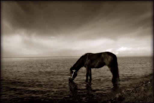 Horse_Drinking-Lake_bgm.nQ3RQ6WiSxLV.jpg