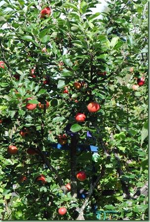 Familje epletre