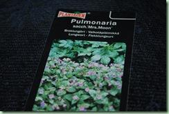 Pulmanaria saccharata