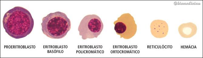 Eritropoese