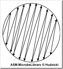 3b diagram