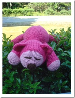 Pinky1DSC03086