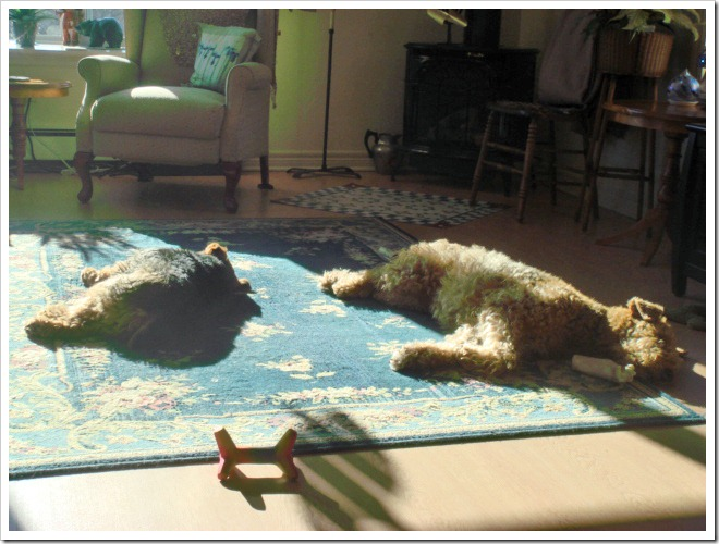 DogsSunningDSC03541_edited-1