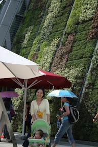 未來城市區某館外,牆上屋頂都種著綠色植物,不知道能不能成真啊…