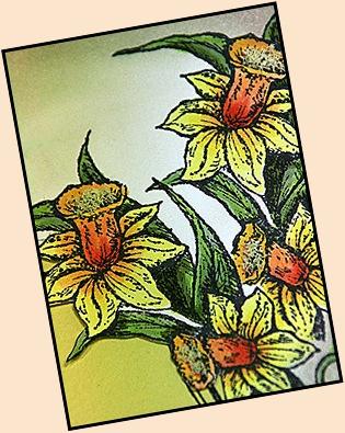 Daffodil clsup