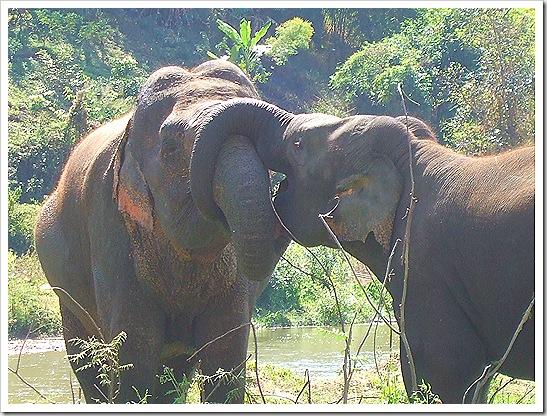 Mae Taeng Elephant Nature Park