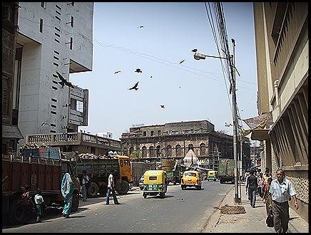 Los pajaritos de la ciudad de Calcuta