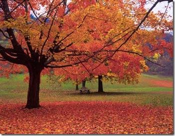 Best-Fall-Leaves-Wallpaper