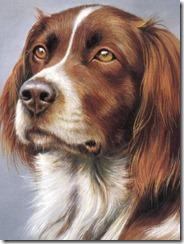 240x320-Cute-Dog