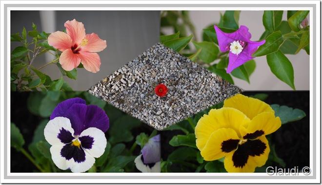Fleurs a1