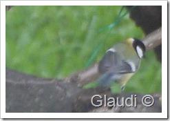 Oiseau 2 P1130404