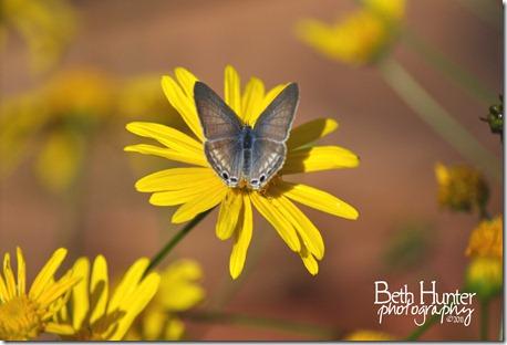 cr-e-bfly--daisy