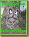 treehugging-tots-small-button[3]