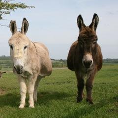DonkeyWatching