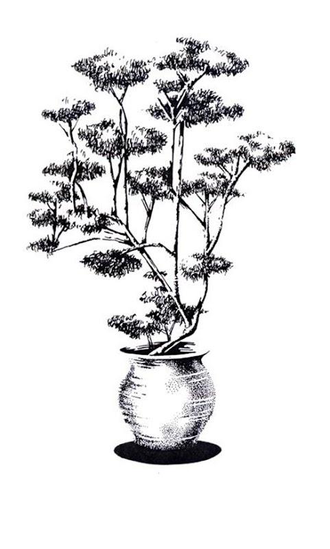 planta (Large)