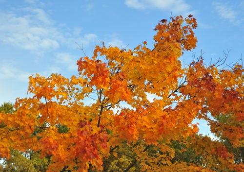 Fall Dourdan