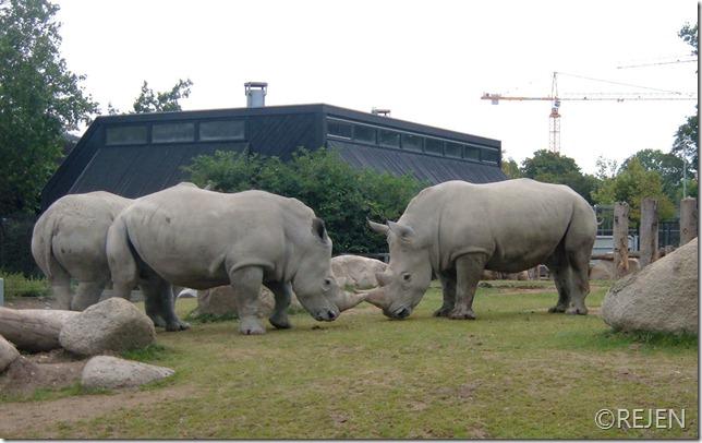 zoo 2007 012