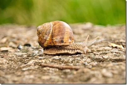 crawl-snail-1