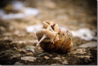 crawl-snail-3