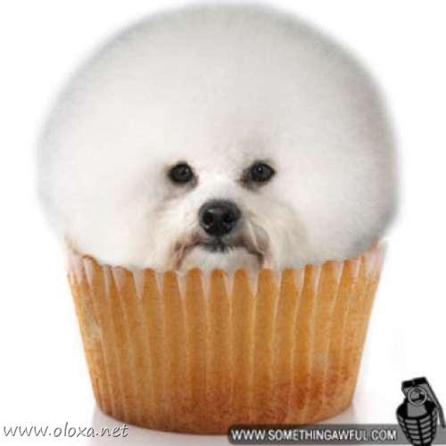 puff-dog-meme-3