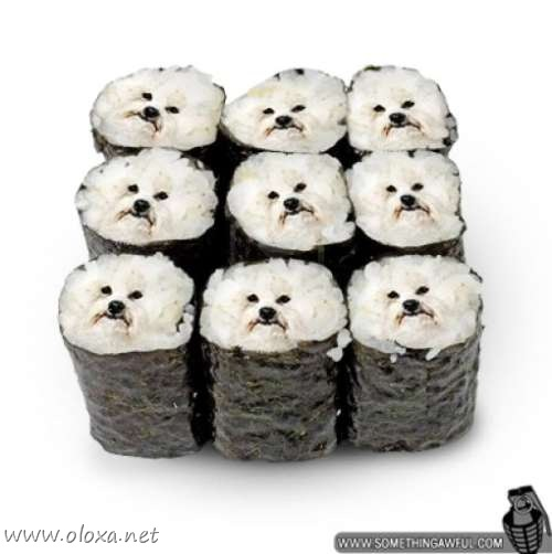 puff-dog-meme-4