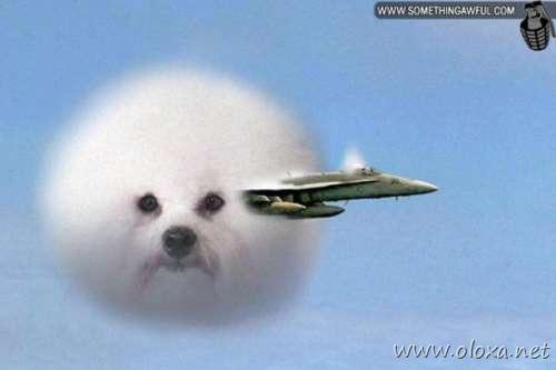 puff-dog-meme-15