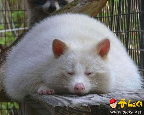 fat-animals-1