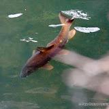 Pêche truite 34.jpg