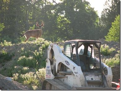 deer in park 325