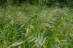 ...zaczail sie w trawie i wypatruje ofiary ;-)