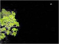 Objeto voador fotografado no céu de Itatira. Segundo moradores, ele se move rápido e irradia luz forte