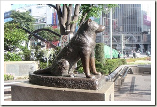 Hachiko200505-4