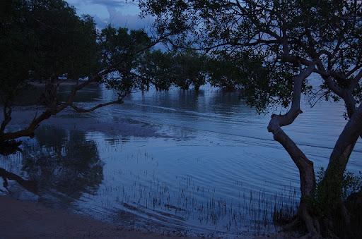 マイクロテル - マングローブ林に潮が満ちる夕暮れ