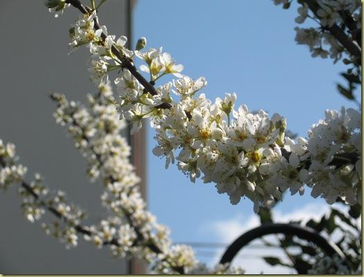 inizi primavera 011