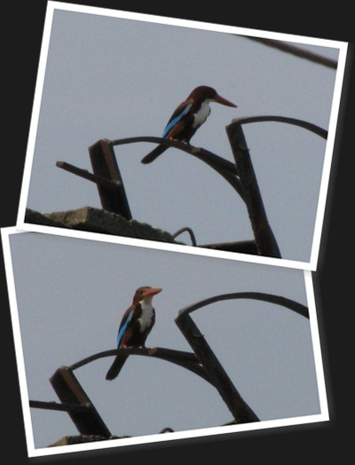 View Kingfisher
