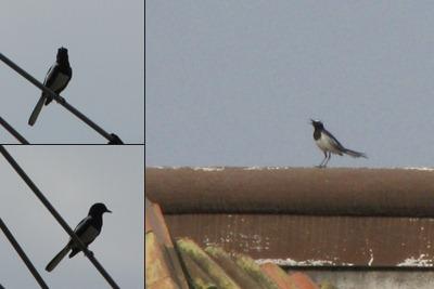 View Bird