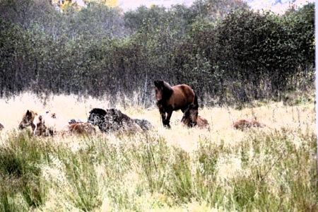 hestemorgen-redigert