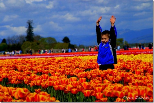 Boy in the Tulips